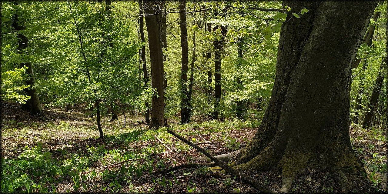 Procházka po lesích